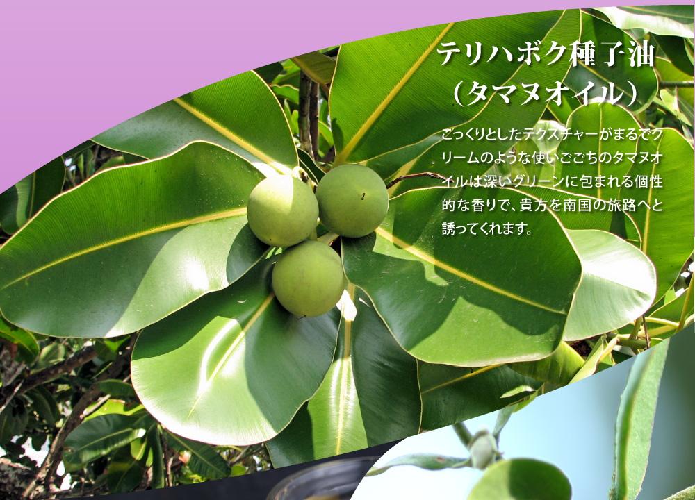 テリハボク種子油(タマヌオイル)